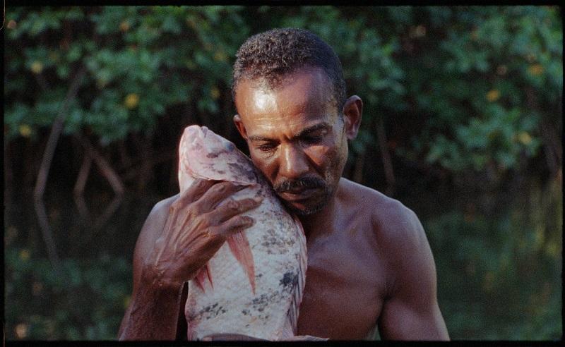 O Peixe 1